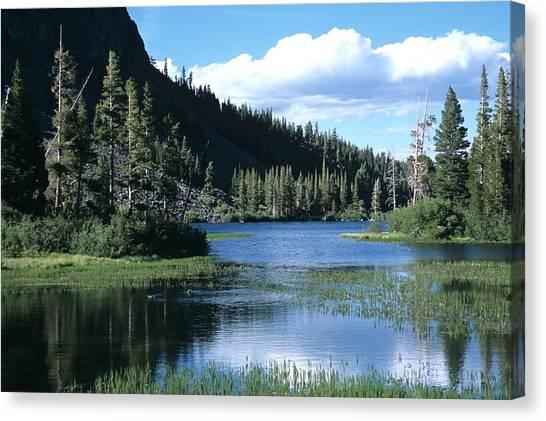 Twin Lakes And Ducks Feeding Canvas Print