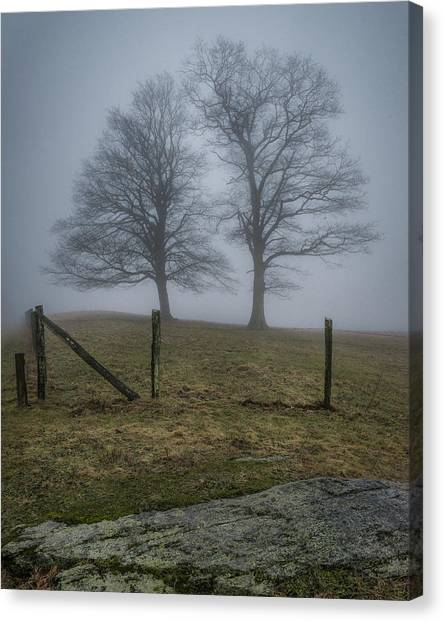 Twin Trees Late Fall Foggy Morning Canvas Print