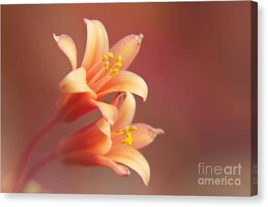 Twin Yucca Flowers Canvas Print