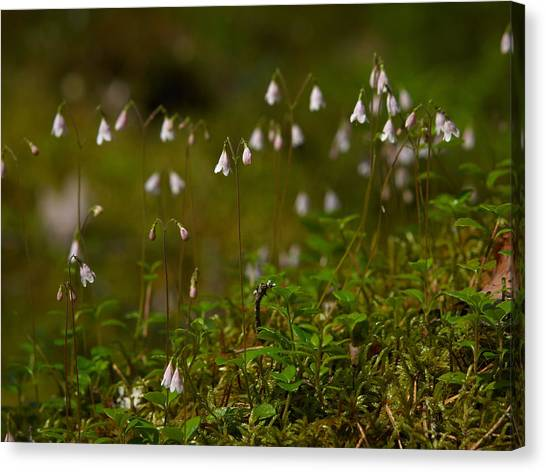 Twinflower Canvas Print