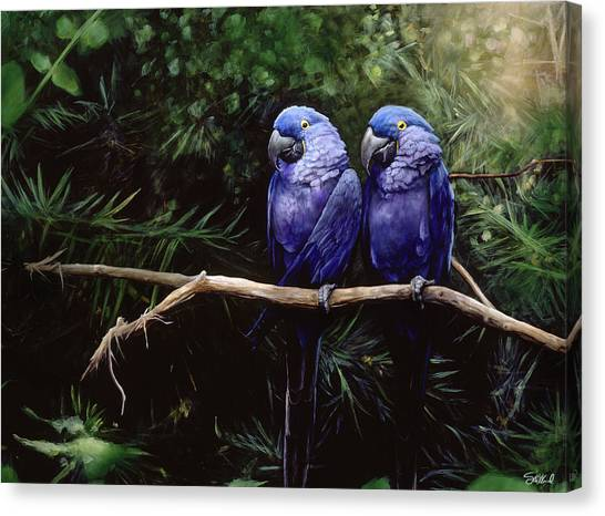 Macaws Canvas Print - Twins by Steve Goad