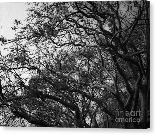 Twirling Branches Canvas Print
