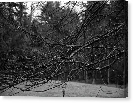 Canvas Print featuring the photograph Twisted And Wet by Angie Tirado