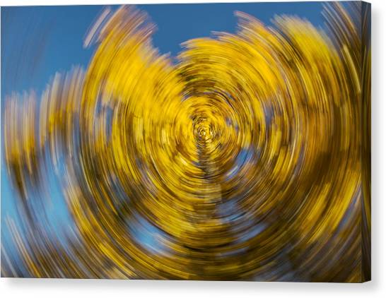 Twisted Colors Canvas Print