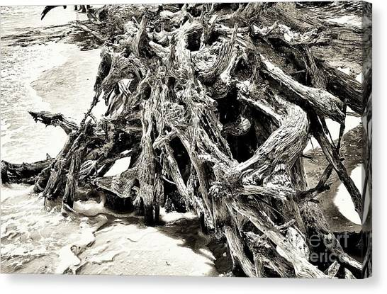 Twisted Driftwood Canvas Print