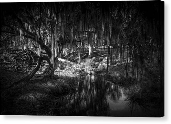 Horse Farms Canvas Print - Twisted Oak by Marvin Spates