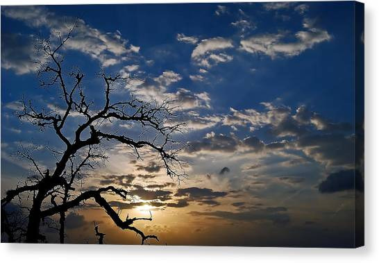 Twisted Sunset Canvas Print by Karl Manteuffel