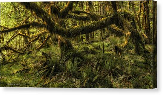 Aspect Canvas Print - Twisted  by T-S Fine Art Landscape Photography