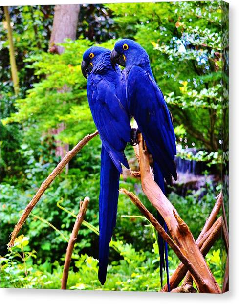 Two Birds Of A Feather Canvas Print