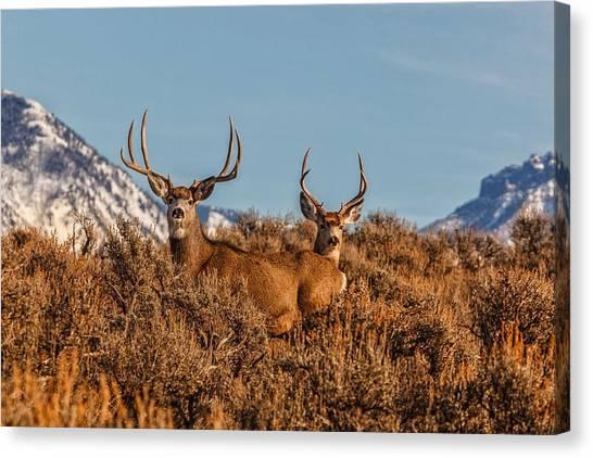 Two Bucks Glory Canvas Print