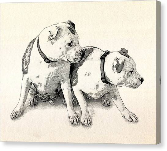 Bulls Canvas Print - Two Bull Terriers by Michael Tompsett