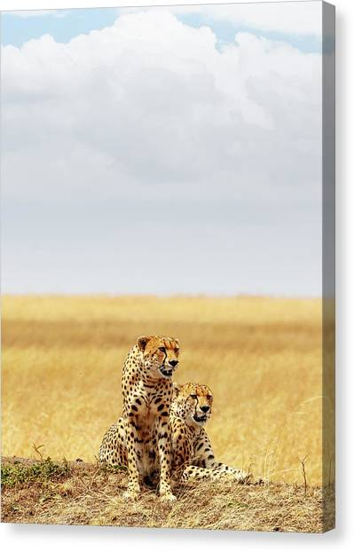 Cheetahs Canvas Print - Two Cheetahs In Africa - Vertical With Copy Space by Susan Schmitz