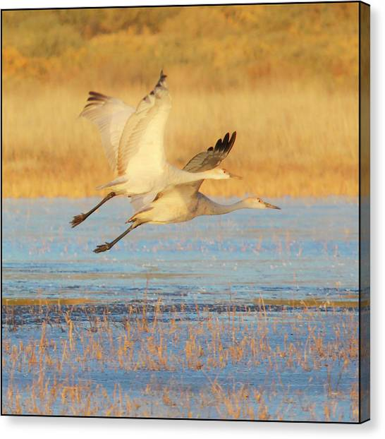 Two Cranes Cruising Canvas Print
