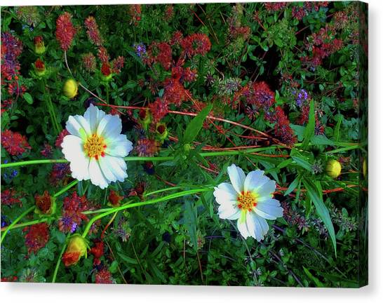 Canvas Print featuring the photograph Two Daisies by Roger Bester