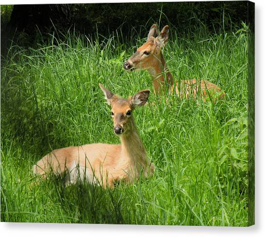 Two Deer In Tall Grass Canvas Print by Rosalie Scanlon