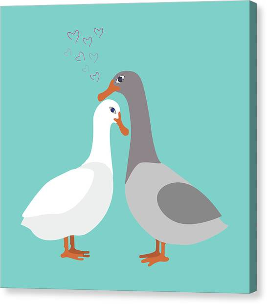 Two Ducks In Love Canvas Print