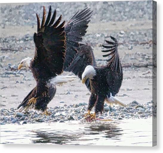 Two Eagles Canvas Print by Clarence Alford