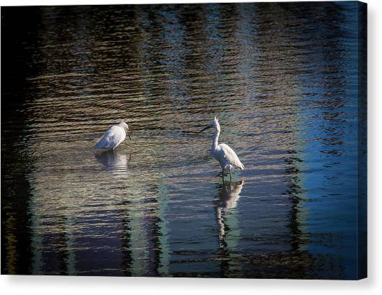 Bodega Canvas Print - Two Egret's Fishing by Garry Gay