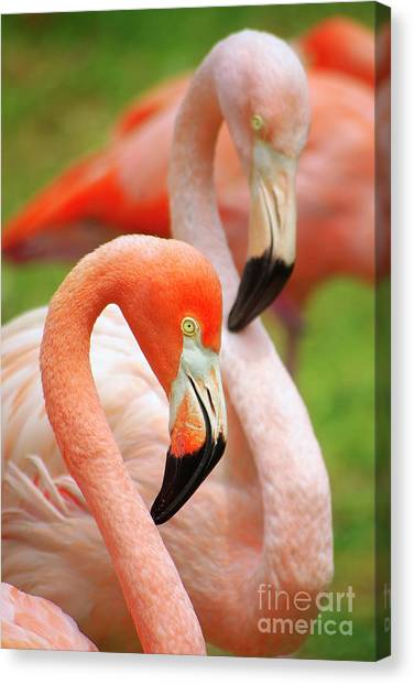 Flamingos Canvas Print - Two Flamingoes by Carlos Caetano