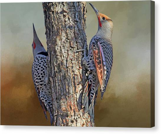 Northern Flicker Canvas Print - Two Flickers by Donna Kennedy