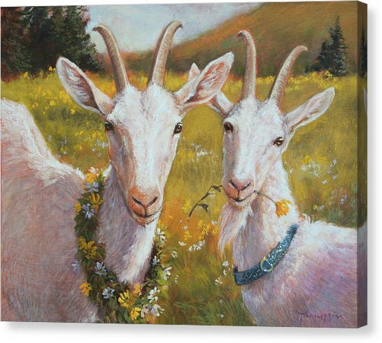 Goats Canvas Print - Two Goats Of Summer by Tracie Thompson