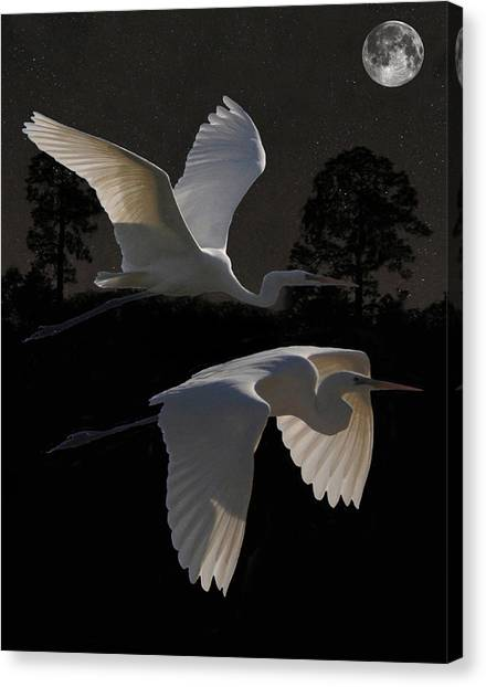 Two Great Egrets In Flight Canvas Print