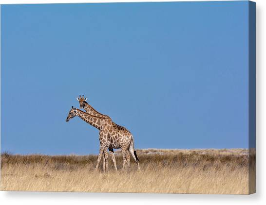 Canvas Print featuring the photograph Two Heads Are Better Than One by Rand