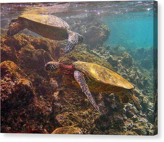 Two Honu On The Reef Canvas Print
