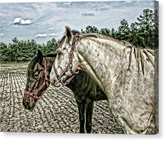 Two Horses In A Field Canvas Print