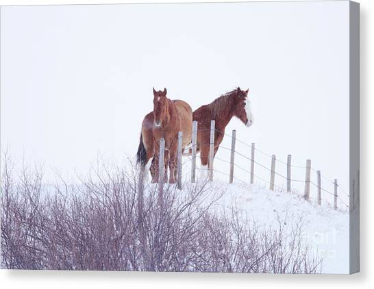 Two Horses In The Snow Canvas Print
