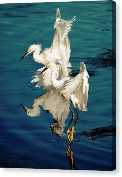Two In Tandem Canvas Print