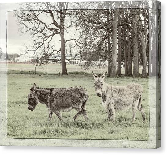 Cantankerous Canvas Print - Two Jack Asses by Jean Noren
