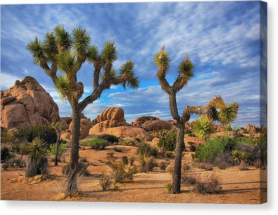 Mojave Desert Canvas Print - Two Joshua Trees In Joshua Tree National Park by Dave Dilli