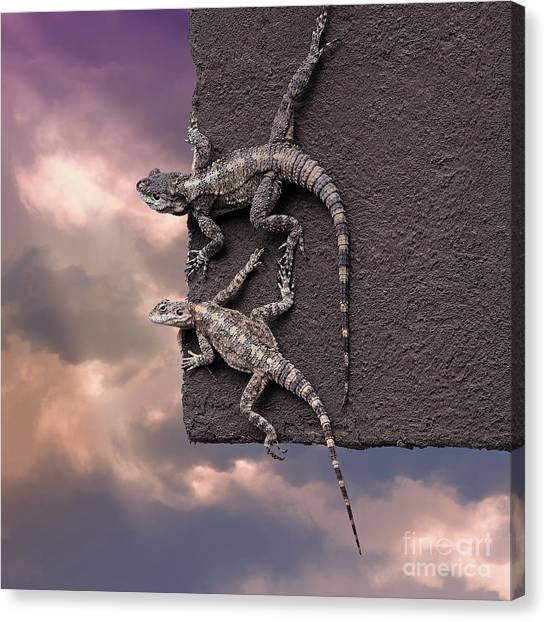 Two Lizards On The Edge Of The Roof Canvas Print