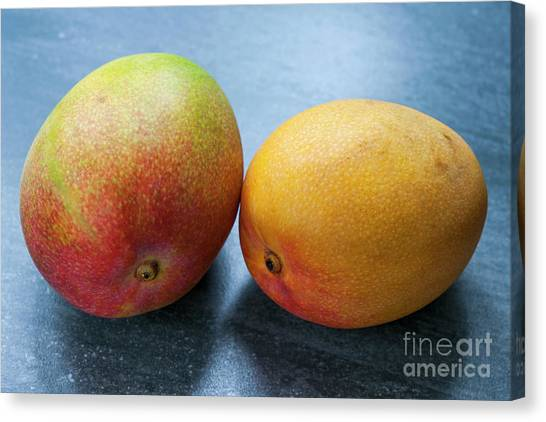 Mango Canvas Print - Two Mangos by Elena Elisseeva
