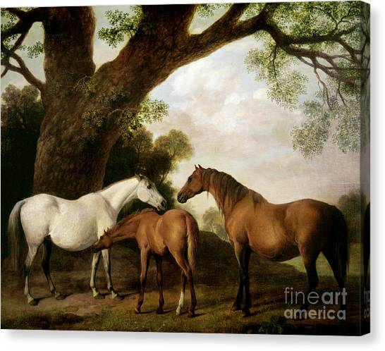 Horses Canvas Print - Two Mares And A Foal by George Stubbs