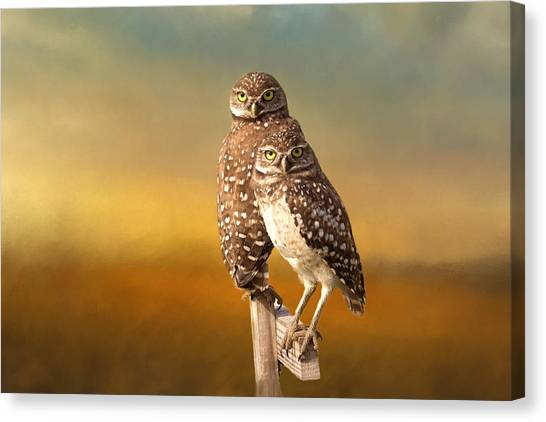 Owls Canvas Print - Two Of Us by Kim Hojnacki