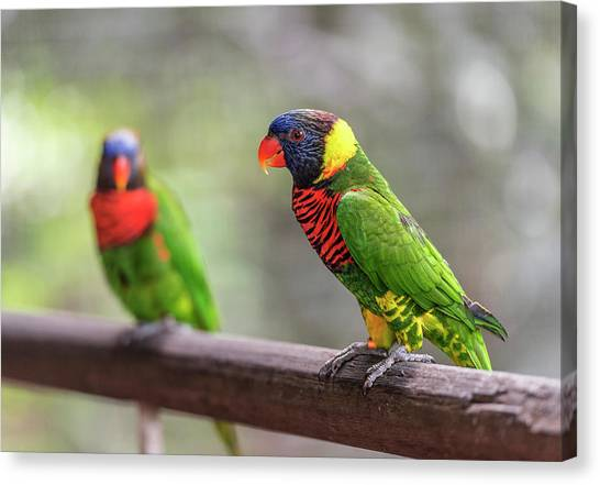 Canvas Print featuring the photograph Two Parrots by Pradeep Raja Prints