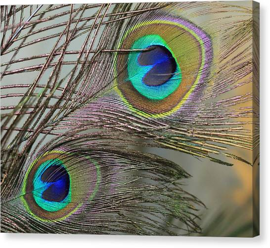 Two Peacock Feathers Canvas Print
