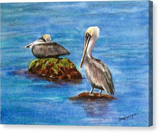 Two Pelicans Canvas Print by Suzanne Krueger