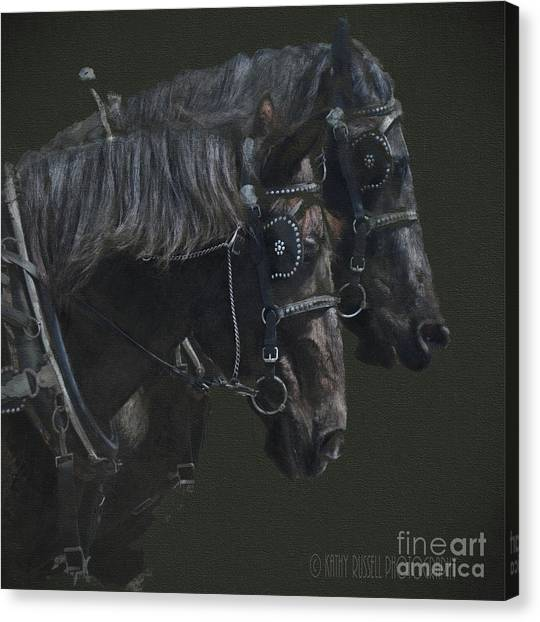 Two Percherons Canvas Print