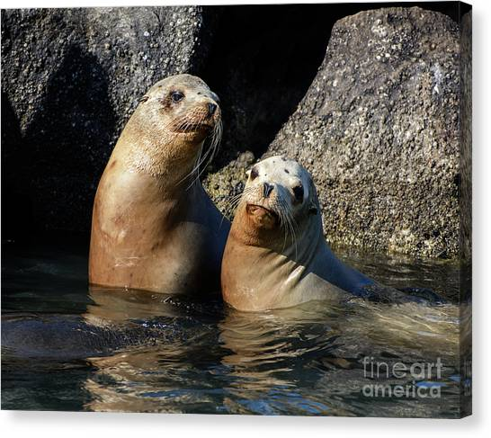 Two Quiet Sea Lions Canvas Print