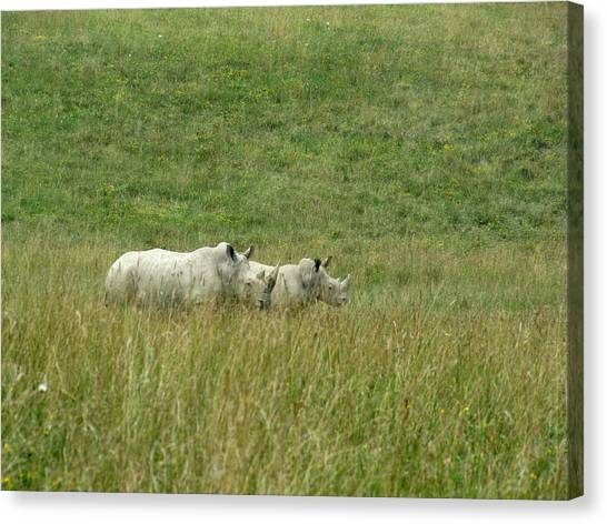 Two Rhino In The Grass Canvas Print by George Jones
