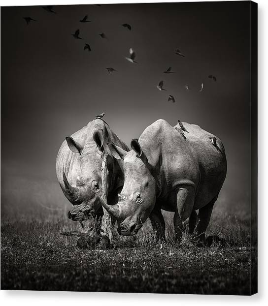 Rhinos Canvas Print - Two Rhinoceros With Birds In Bw by Johan Swanepoel