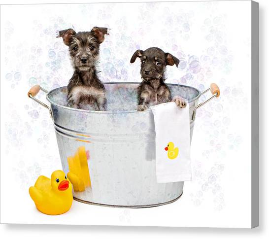 Puppies Canvas Print - Two Scruffy Puppies In A Tub by Susan Schmitz