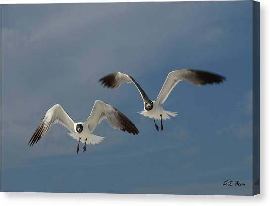 Two Seagulls Canvas Print by Dennis Stein