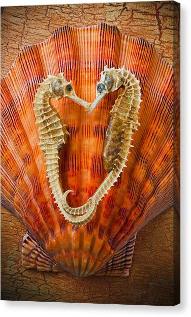 Seahorses Canvas Print - Two Seahorses On Seashell by Garry Gay