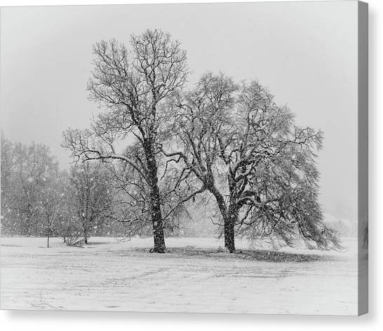Two Sister Trees Canvas Print