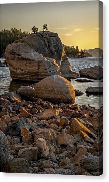 Two Small Trees Canvas Print