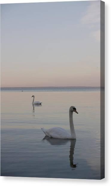Two Swans Canvas Print by Stanislovas Kairys